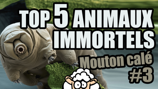 TOP 5 des ANIMAUX IMMORTELS – Mouton calé #3